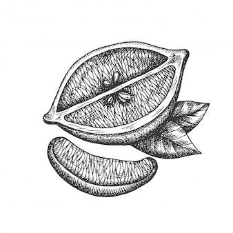 ビンテージスタイルの手描きレモンイラスト