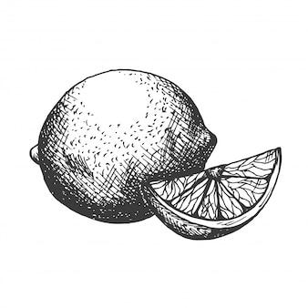 Рисованной иллюстрации лимона в винтажном стиле