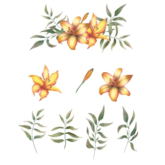 Hand drawn lily elements
