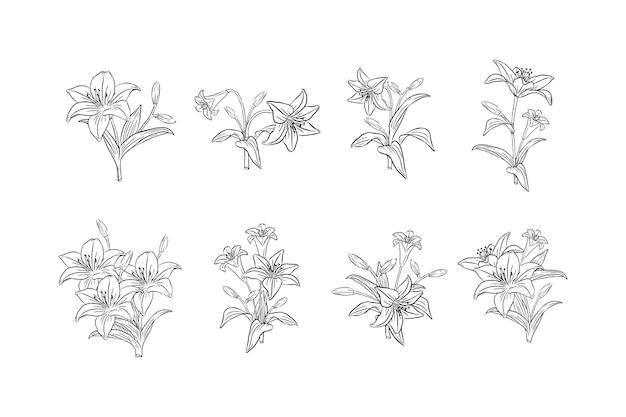 손으로 그린 백합 꽃 세트