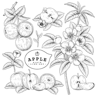 Hand drawn line art apple decorative set isolated on white backgrounds