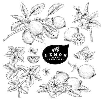 Hand drawn line art citrus fruit lemon decorative set isolated on white backgrounds