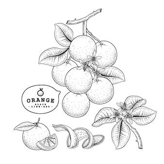 Hand drawn line art citrus fruit orange decorative set isolated on white backgrounds