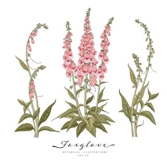 손으로 그린 라인 아트 디기탈리스 꽃 장식 세트 흰색 배경에 고립