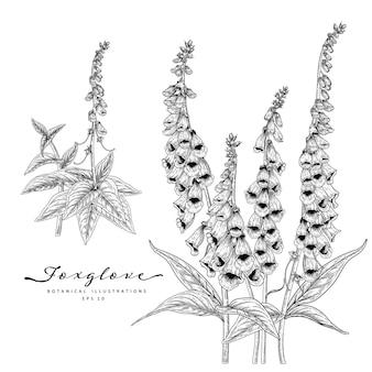 손으로 그린 라인 아트 디기탈리스 꽃 장식 세트 흰색 배경에 고립 프리미엄 벡터