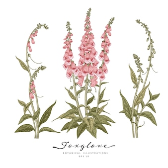 Hand drawn line art foxglove flower decorative set isolated on white backgrounds