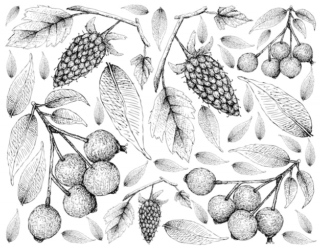 Hand drawn of loganberries and magenta cherries background