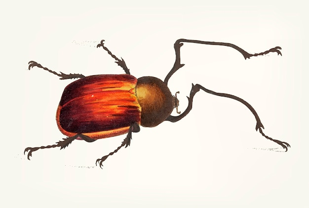 Hand drawn of long-armed beetle