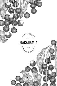手描きのマカダミアの枝とカーネルのデザイン。白の有機食品のイラスト。