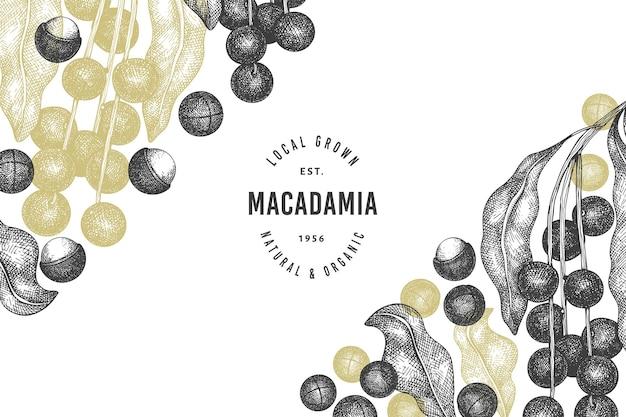Вручите оттянутый шаблон ветви и ядер макадамии. иллюстрация органических продуктов питания на белом фоне. ретро гайка иллюстрации. ботанический баннер в стиле гравировки.