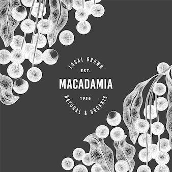 Hand drawn macadamia branch and kernels  template. organic food  illustration on chalk board. vintage nut illustration. engraved style botanical banner.