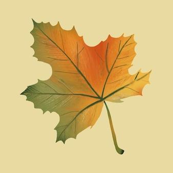 손으로 그린 단풍 요소 벡터 가을 잎
