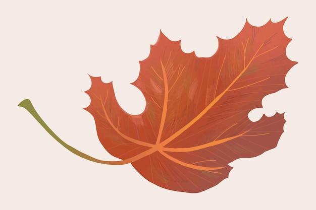 Hand drawn maple element vector fall leaf