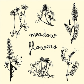 Hand drawn meadow flowers set