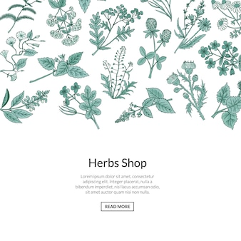 Рисованной лекарственные травы фон с местом для текста