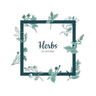 Hand drawn medical herbs frame