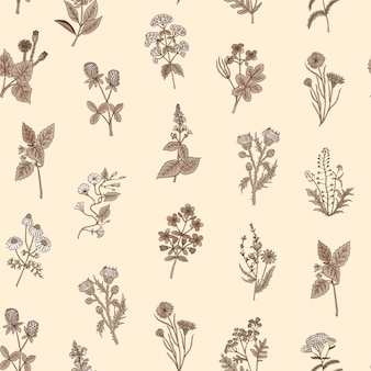Hand drawn medical herbs pattern or