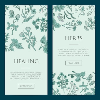 Hand drawn medical herbs web banner templates