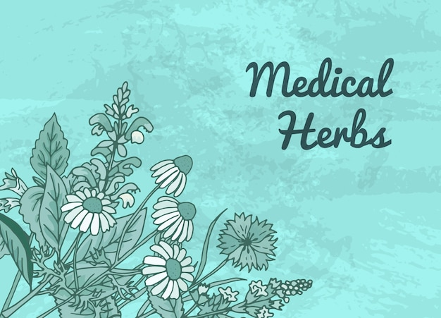 Hand drawn medical herbs