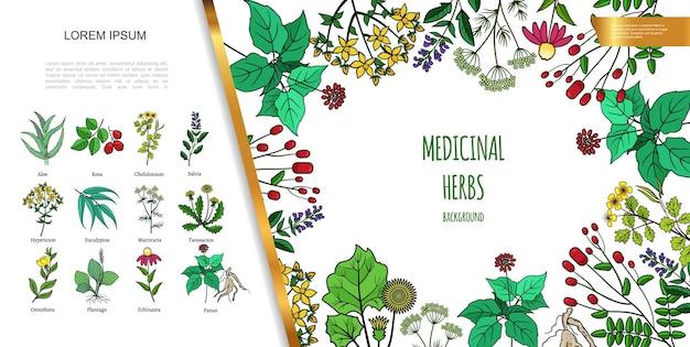 Нарисованные от руки лекарственные травы с различными медицинскими препаратами и иллюстрацией здоровых растений
