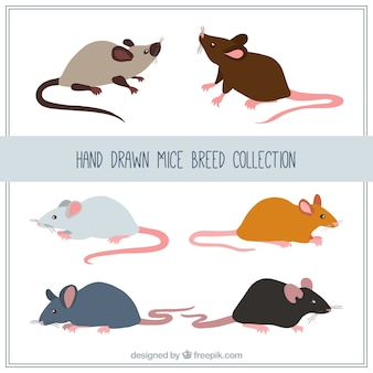 Hand drawn mice breed collection