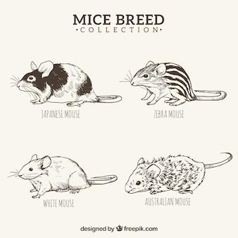 Hand drawn mice breed set