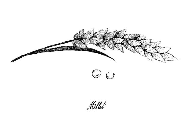 Hand drawn millet illustration