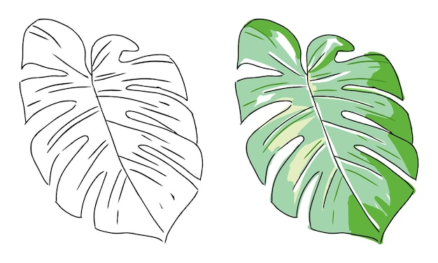 Hand drawn monstera leaf coloring page for kids
