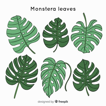 Hand drawn monstera leaves collection