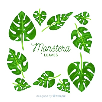 Hand drawn monstera leaves pack