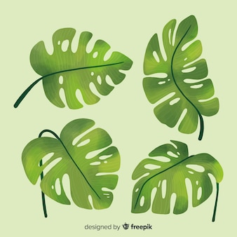 Hand drawn monstera leaves set