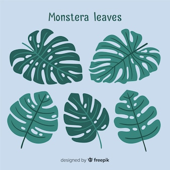 Hand drawn monstera leaves
