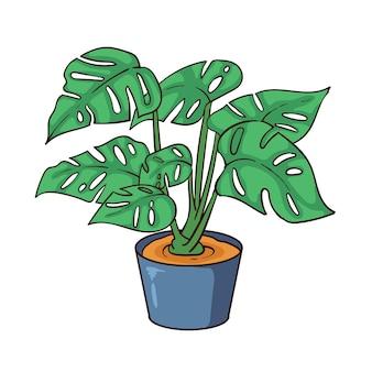 Hand drawn monstera  plant