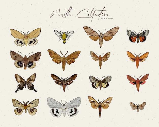 Hand drawn moth collection illustration