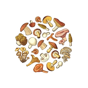 Hand drawn mushrooms in circle shape