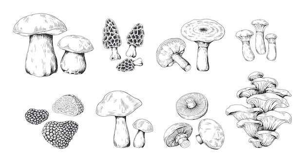 손으로 그린 버섯 그림
