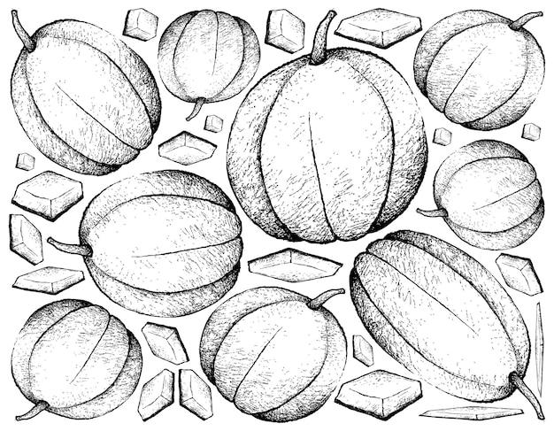 Hand drawn of muskmelon fruit llustration