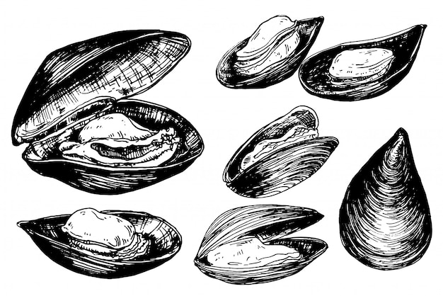 Hand drawn mussels