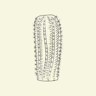 손으로 그린된 notocactus 밝은 배경에 고립입니다. 야생 선인장 밑그림입니다. 선인장 조각 빈티지 스타일입니다. 벡터 일러스트 레이 션.