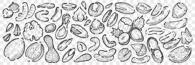 Набор рисованной орехи каракули. коллекция карандашом мелом рисунок эскизы миндаля, кешью, макадамии, арахиса, кедра, фисташек, фундука, грецких орехов, семян на прозрачном фоне. иллюстрация натуральных продуктов питания.
