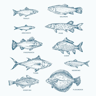 Hand drawn ocean or sea and river ten fishes set. a collection of salmon and tuna or pike and anchovy, herring, trout, carp sketches silhouettes. isolated.