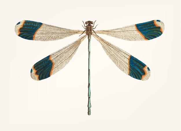 Рисованная стрекоза с голубыми наконечниками