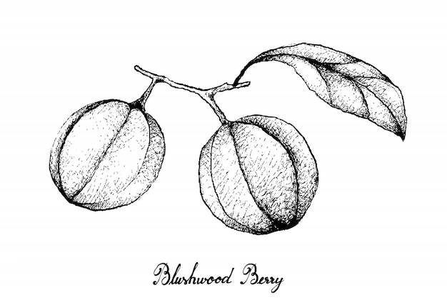 흰색 바탕에 진한 딸기 열매의 손으로 그린