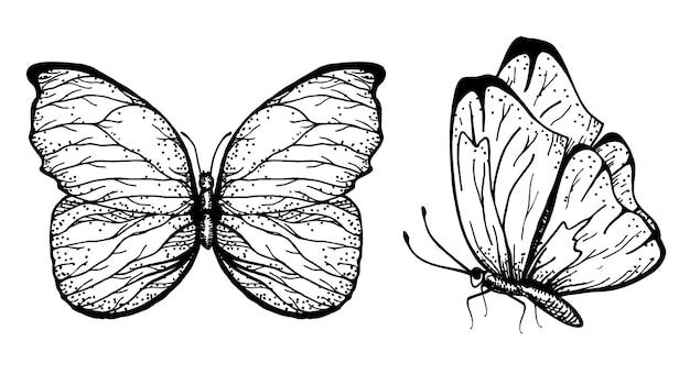 開いた翼と折りたたまれた翼を持つ蝶の手描き。スケッチ。コレクション