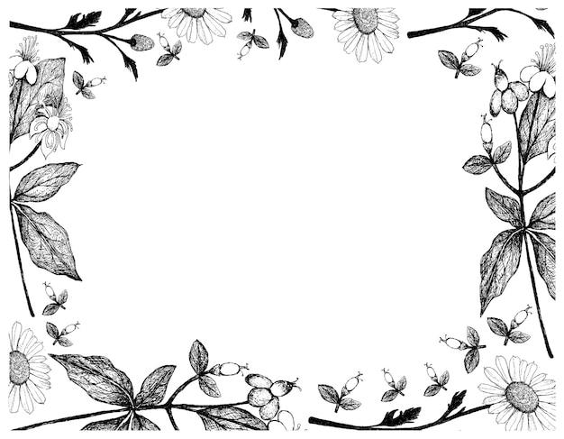 손으로 그린 camomile 및 tutsan 꽃 프레임
