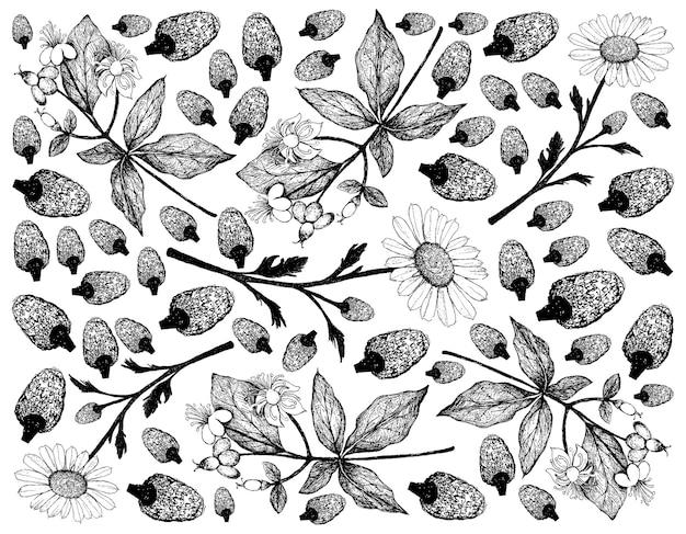 손으로 그린 camomile 및 tutsan 꽃