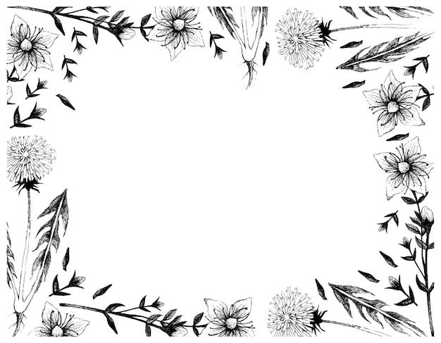 Нарисованный от руки одуванчик и продырявленные растения зверобоя