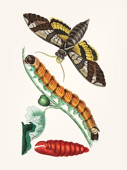 Ручной рисунок сфинкса смоковницы