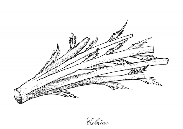 흰색 바탕에 신선한 celeriac의 손으로 그린