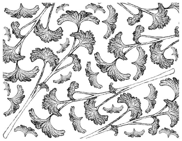 新鮮な緑のパセリの背景の手描き